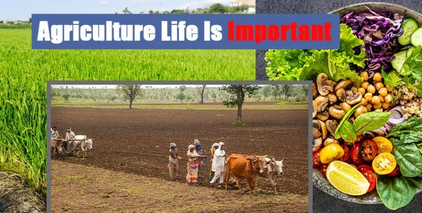 Agriculture Life Is Important