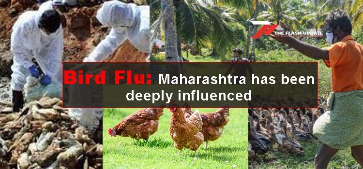 Bird Flu: Maharashtra has been deeply influenced