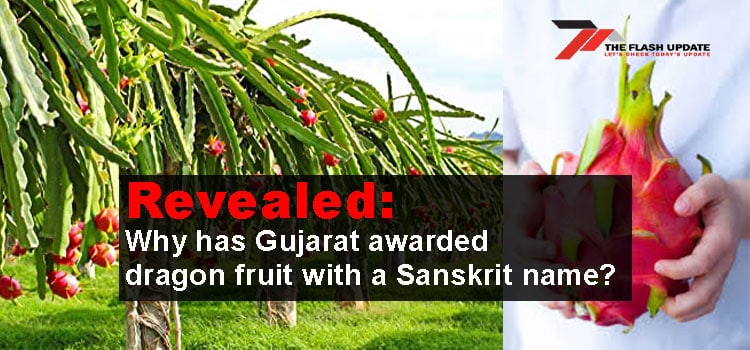 Revealed: Why has Gujarat awarded dragon fruit with a Sanskrit name?