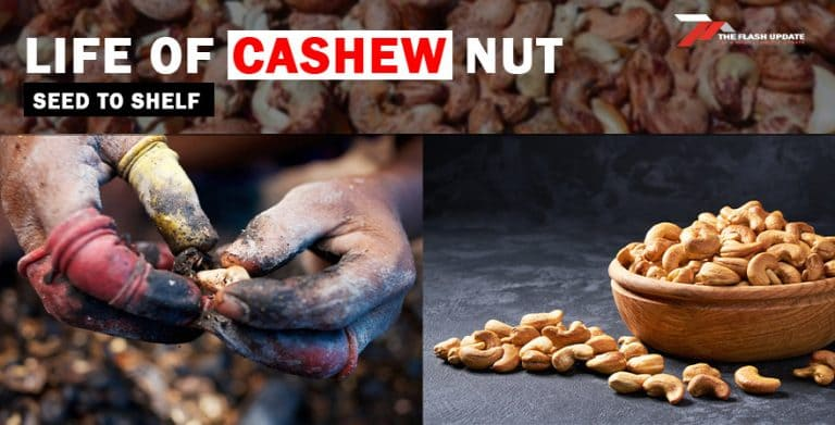 Life cycle of a Cashew Nut, seed to shelf